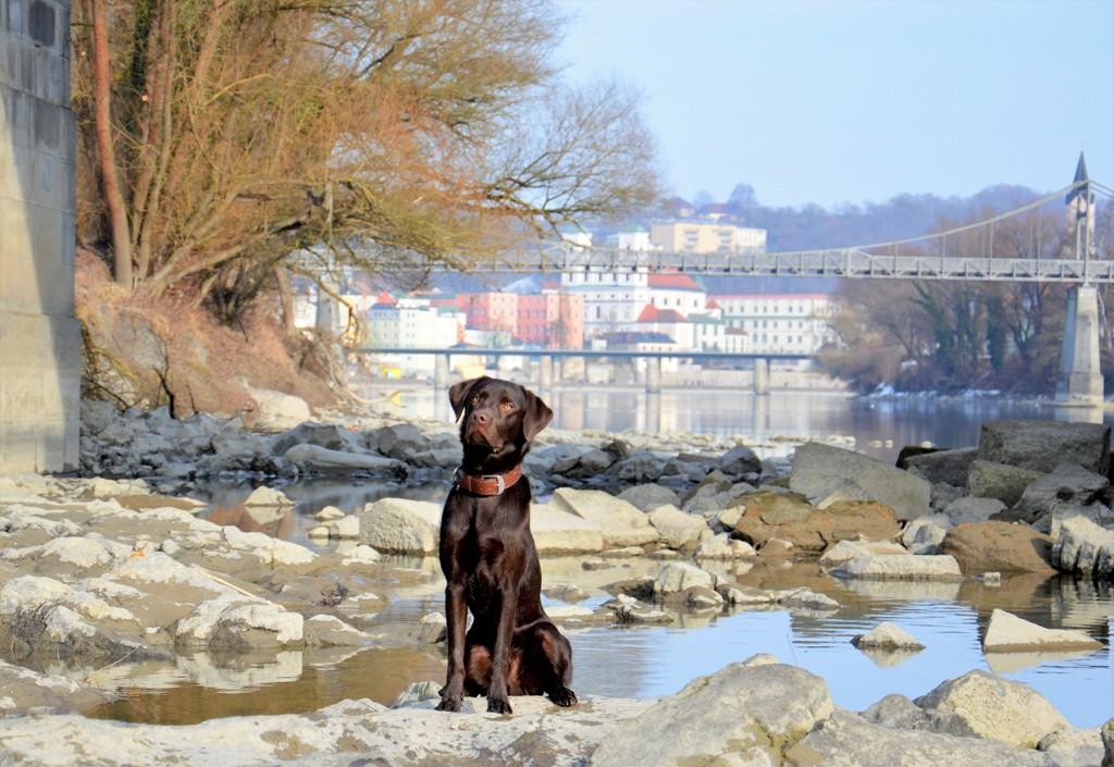 Hundeschule Passau